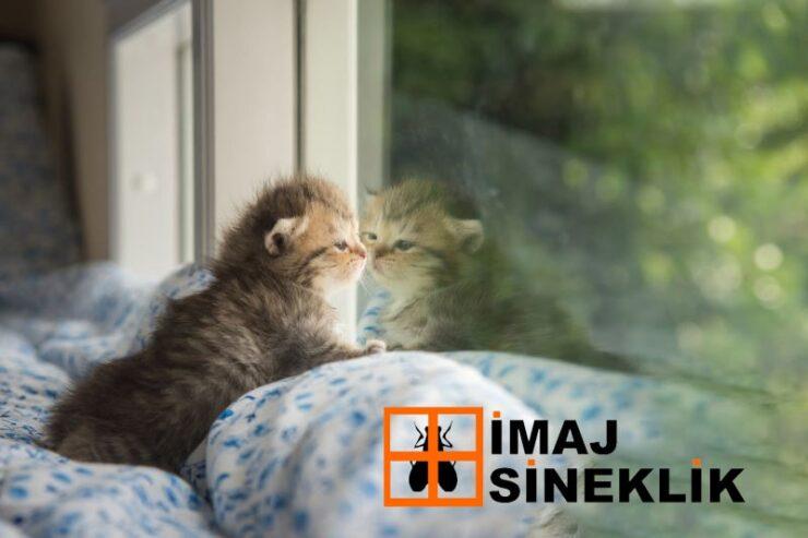 İmaj Kedi Sineklik